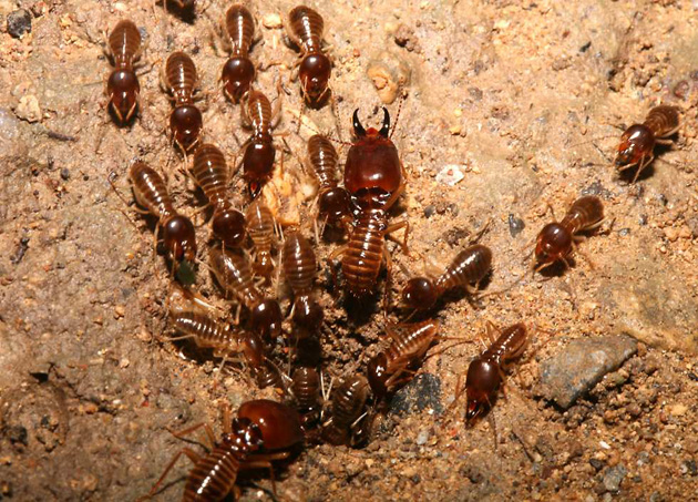 Жуй жука: насекомые с повышенной пищевой ценностью