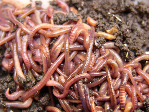 как убить паразитов в организме
