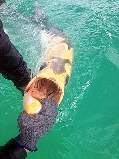 Морские чудовища, случайно попавшие в сети в рыбаков