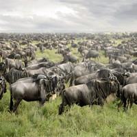 Великие скопления животных, которые поражают воображение