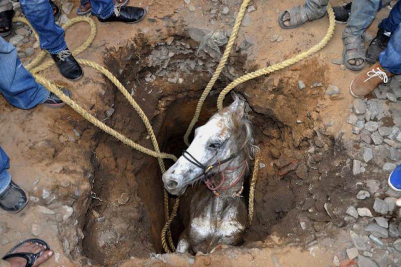 Спасение лошади в Джаландаре в штате Пенджаб на севере Индии. 5 марта 2014.
