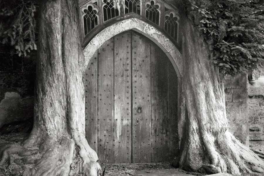 «При виде этих деревьев мы начинаем намного сильнее ощущать время и развиваем глубинную, даже подчас эмоциональную связь с природой. Мы сохраняем эти знания и переживания, а затем они становятся частью нас самих», — пишет Мун в своей книге.