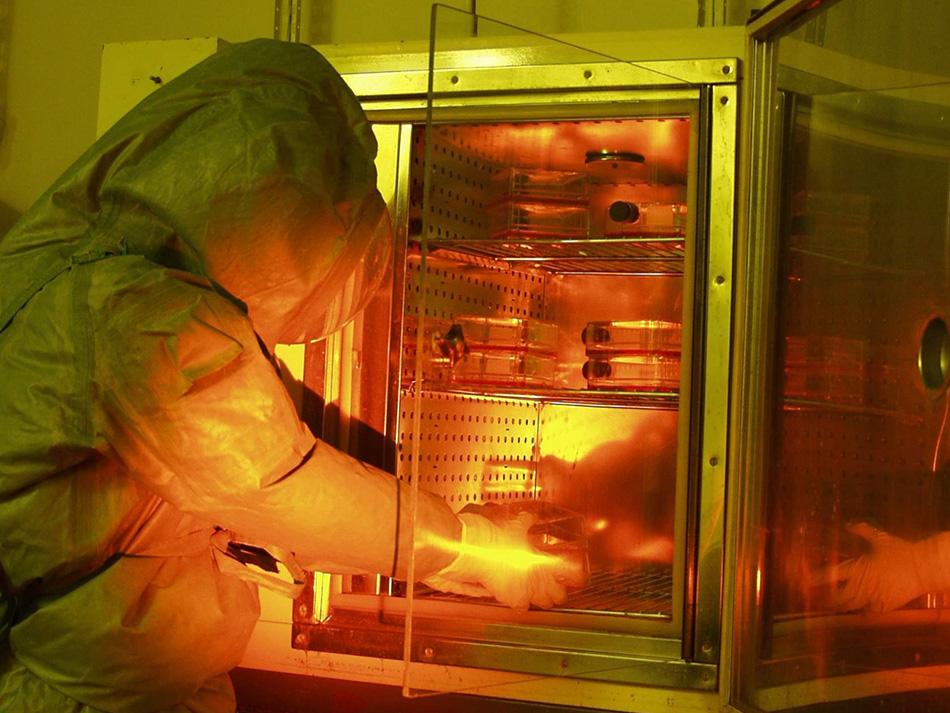 Эбола в России В СМИ можно найти упоминания о четверых российских ученых, случайно заразившихся Эболой. Трое из них погибли. Все они были сотрудниками закрытых институтов, где в том числе велись разработки биологического оружия на базе Эболы и родственного вируса Марбург. Так в 1994 году лаборантка научного центра «Вектор», что под Новосибирском, по ошибке укололась иглой от шприца. Спустя два года похожим образом заразилась сотрудница НИИ микробиологии Минобороны. Заразившийся в 1990 году Марбургом сотрудник «Вектора»сумел выжить.