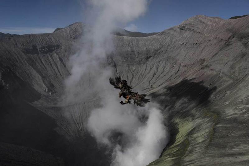 Птица, пролетающая над кратером индонезийского вулкана Бромо во время ежегодного фестиваля Ядная Касада. 12 августа 2014.