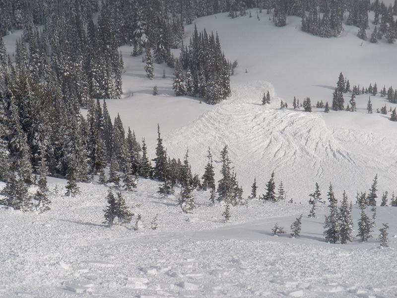 Правило №11 Молодые невысокие рассредоточенные деревья с ветками, растущими только по направлению склона — самый очевидный признак лавиноопасного участка.