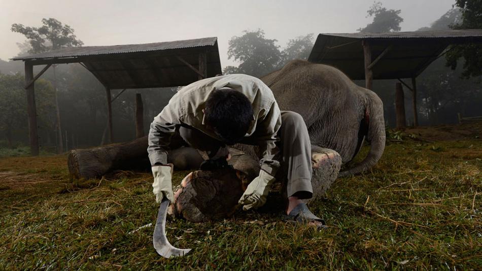 Мачете №72: Национальный парк Читван, Непал Слоны, живущие в неволе, часто страдают от проблем с ногами. Из-за недостаточной подвижности ногти сильно отрастают или врастают в кожу, вызывая инфекции. Подгонщики слонов в заповедники натренированы делать слонам педикюр, чтобы у тех не было проблем со здоровьем.