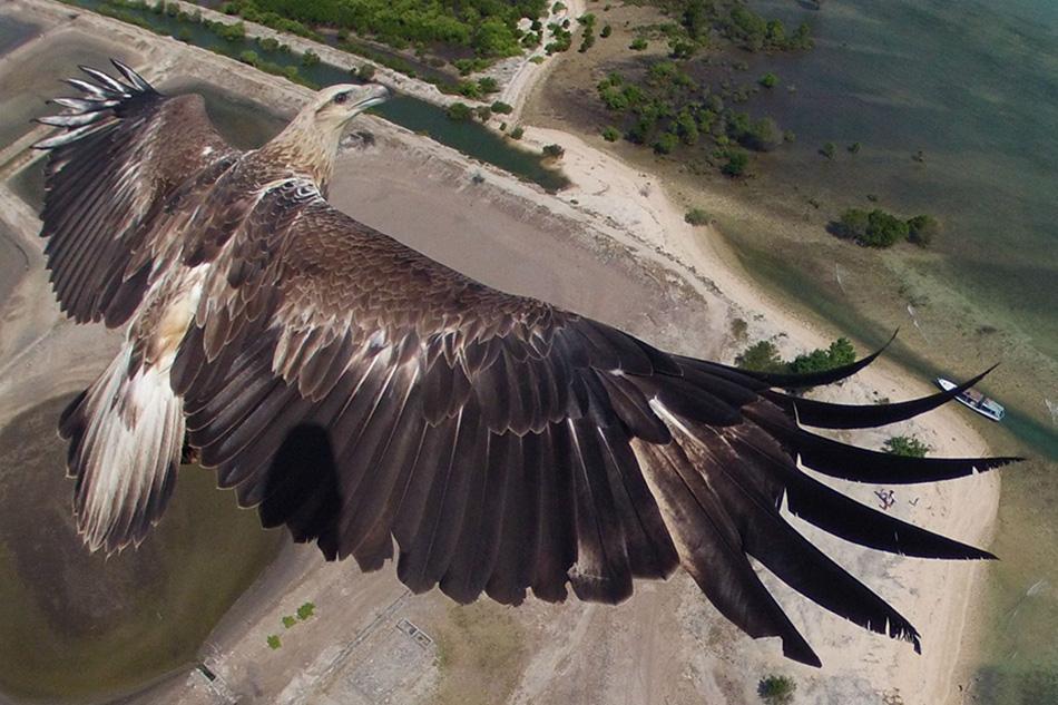 Орел парит над Национальным парком Бали Барат в Индонезии.