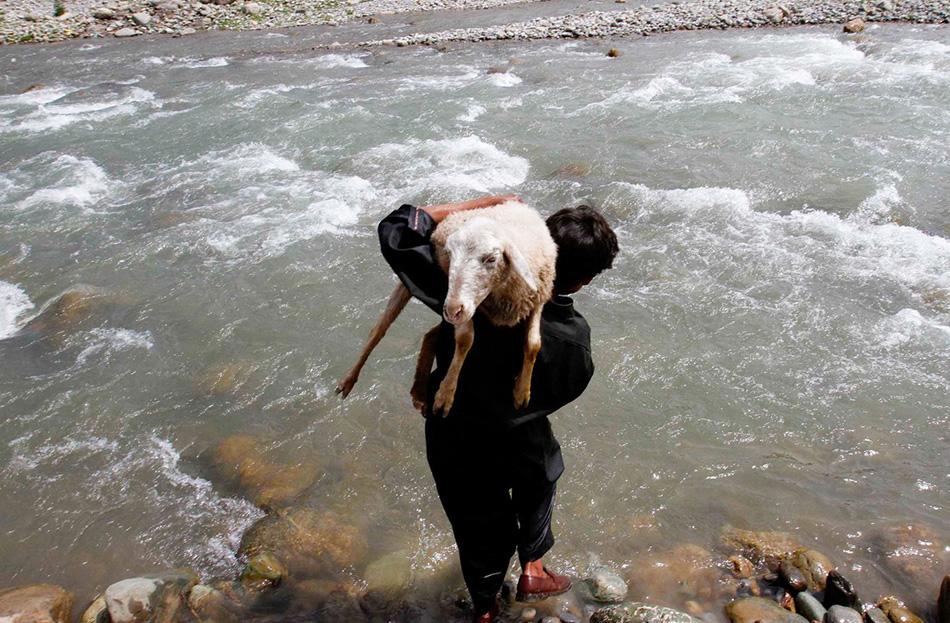 Молодой кочевник несет овцу, чтобы помыть ее в реке в деревне Дуру в 75 километрах к югу от Сринагара.