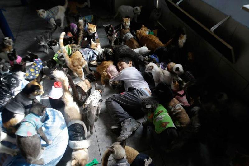 Мария Тореро и ее сын ухаживают за 175 кошками с лейкемией в их доме в Лиме в Перу. 15 августа 2014.