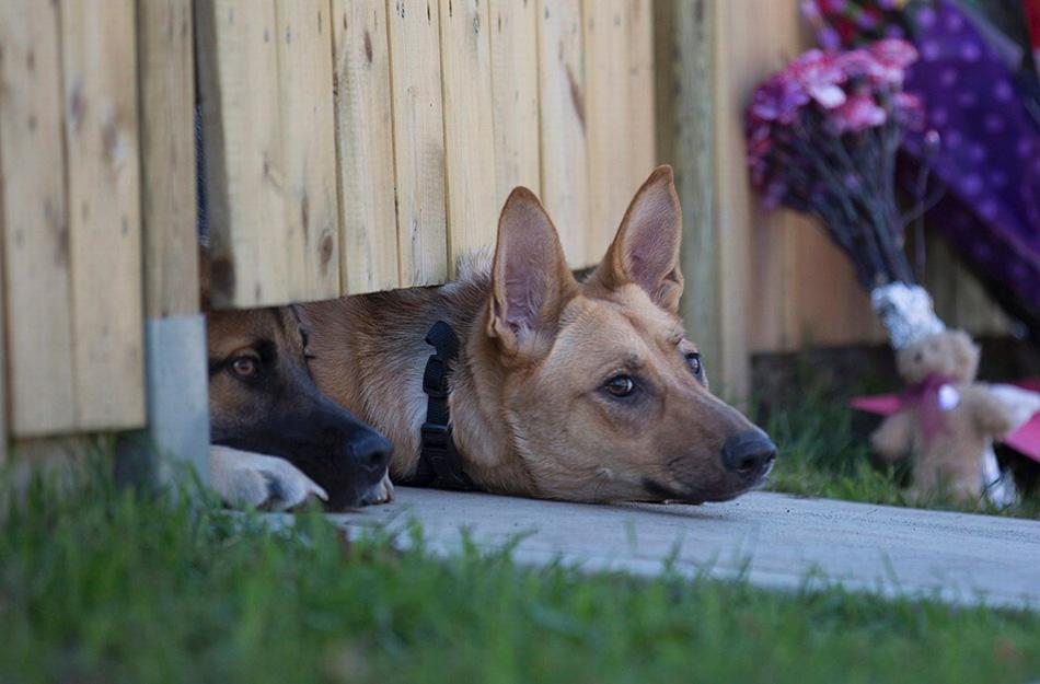 Собаки Собаки — одно из лучших средств охраны на протяжении вот уже нескольких тысяч лет. Чем больше собака, тем лучше. Эти четырехлапые системы охраны, во-первых, будут вас любить, во-вторых, инстинктивно защищать и, в-третьих, их чувства гораздо острее наших, так что о приближающейся опасности они сообщат намногораньше, чем любая сигнализация.