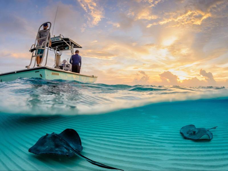 Скаты неподалеку от Каймановых островов, популярного курорта в Карибском море.