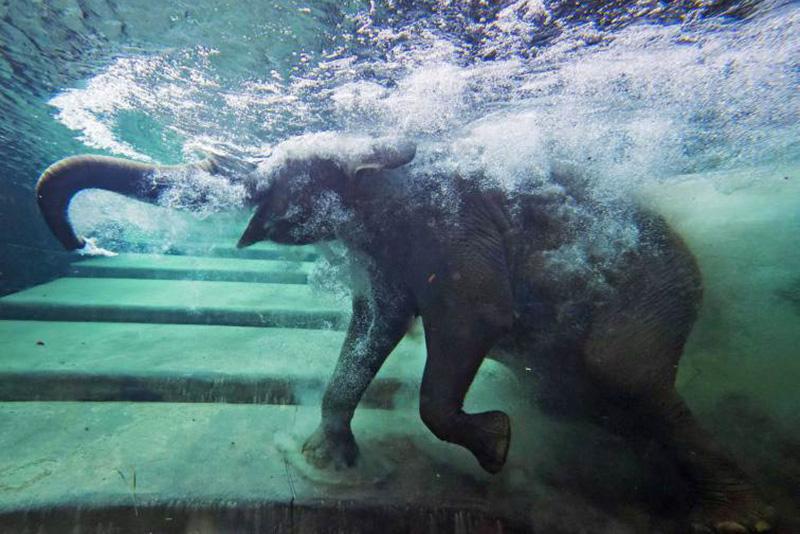 Специальный бассейн для слонов в зоопарке Лейпцига в Германии. 5 августа 2014.