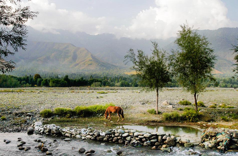 Лошадь кочевников пасется возле деревушки Канган в 40 километрах к северо-востоку от Сринагара.