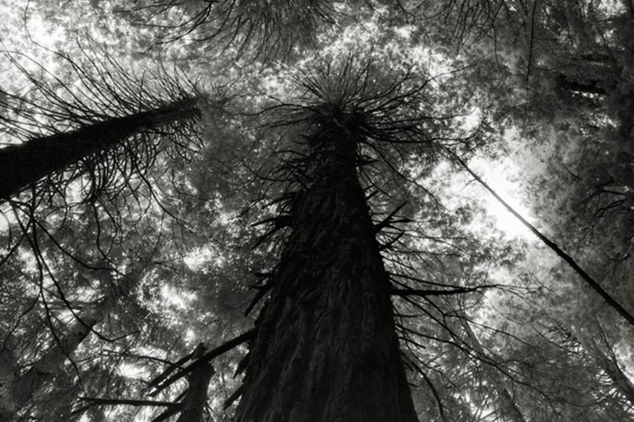 Мун уверена, что эти деревья, будучи древнейшими живыми памятниками на Земле, уже стали определенными символами и будут иметь все большее значение для следующих поколений.