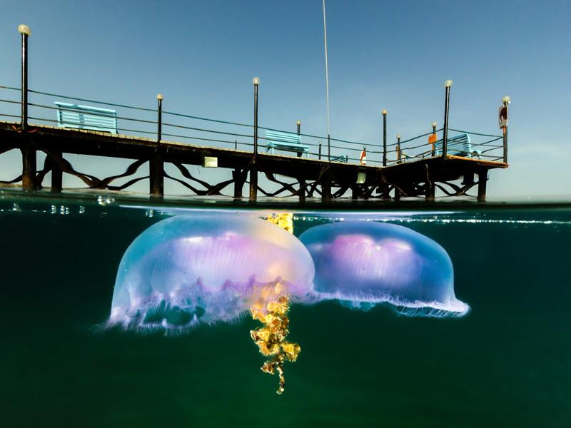 Медуза у пирса в египетском курортном городе Нувейба.