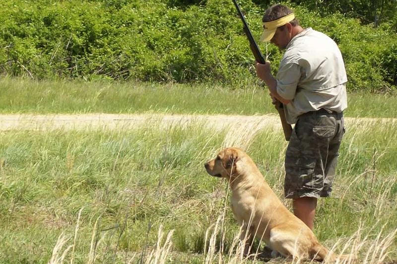 Лабрадор-ретривер Изначально порода была выведена как рабочая собака, но со временем начала использоваться в качестве охотника, поводыря и спасателя. Хороший и страстный охотник отлично проявляет соответствующие навыки в охоте на уток и при охоте на некоторые виды дичи, которые любят прятаться в труднодоступных местах. Собаки этой породы всегда готовы к прогулкам, любят воду и не бояться холода.