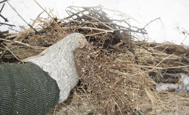 В случае, если попытки отыскать путь к цивилизации не увенчались успехом, первым делом займитесь костром. Чтобы костер не провалился в снег, нужно тщательно расчистить место, в идеале — до земли. Когда площадка будет готова, отправляйтесь на поиски трута и дров. Сухие ветки, мох, кора деревьев, труха пеньков — подойдет абсолютно все, что в теории должно быстро загореться. Не забудьте проверить карманы и пустить на растопку, например, завалявшиеся чеки и денежные купюры.