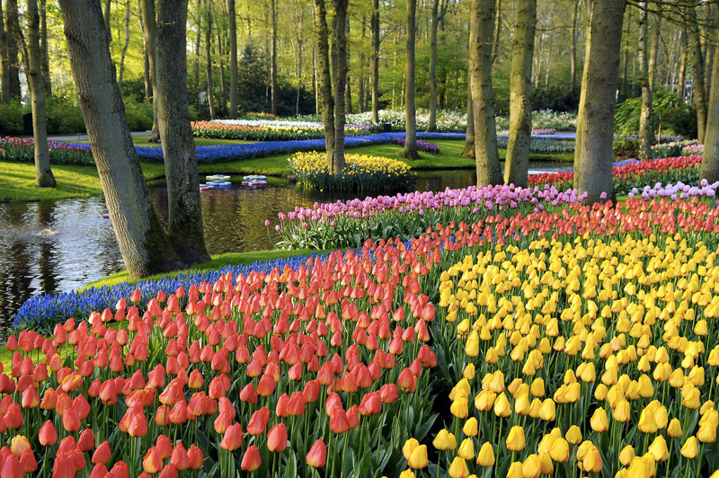 Одной из главной достопримечательностей Голландии считаются поля тюльпанов. Самым популярным местом наблюдения за их цветением является Королевский парк цветов Кёкенхоф. В парке посажено 4,5 миллиона тюльпанов 100 различных разновидностей, которые с середины марта до середины мая можно увидеть во всей красе.