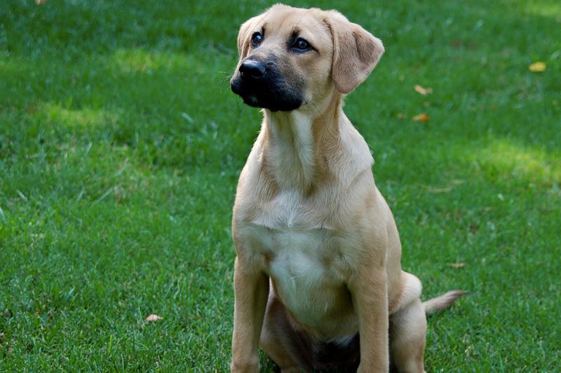 Дворняжка Самые известные собаки-выживальжики — Белка и Стрелка — были дворняжками. На беспородных собак выбор пал потому, что они неприхотливы в еде, обладают крепким здоровьем и смекалкой. Дворняги более выносливые, чем породистые собаки и могут сами ухаживать за собой.