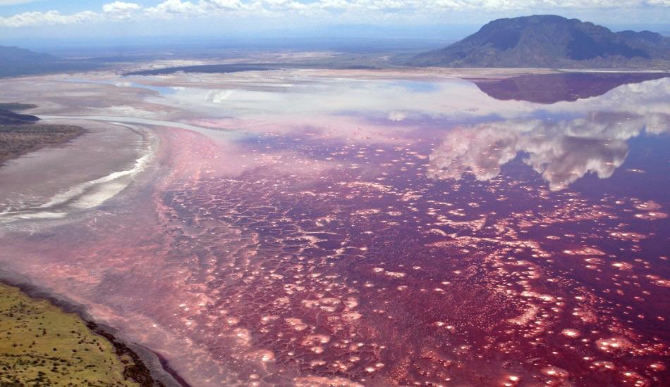 Озеро Натрон, Танзания Это озеро отлично справляется с охранением дикой природы, но только в не совсем привычном смысле этой фразы. Натрон в буквальном смысле превращает животных и птиц в камни, будто они посмотрели в глаза Медузы Гаргоны. На берег озера то и дело вымывает идеально окаменелых птиц (даже голубей) и летучих мышей. Свою способность к кальцинированию это зловещее озеро получило благодаря токсичным золе и пеплу, выделяемых из окружающих вулканов. Никто не может сказать точно, как птицы и животные умирают, но похоже, что идеально отражающая поверхность озера заставляет их совершать фатальное погружение.