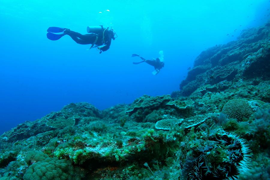 Средняя глубина ныряния здесь около 25 метров, а виды погружения варьируются от дрейфа и пещерного дайвинга до простого плавания вдоль коралловых рифов. В здешних водах вы сможете увидеть косяки морских ангелов, марлин, колючих пеламид (ваху), дельфинов и черепах, и даже такие редкие виды, как галапагосская акула или слизень Испанский танцор.