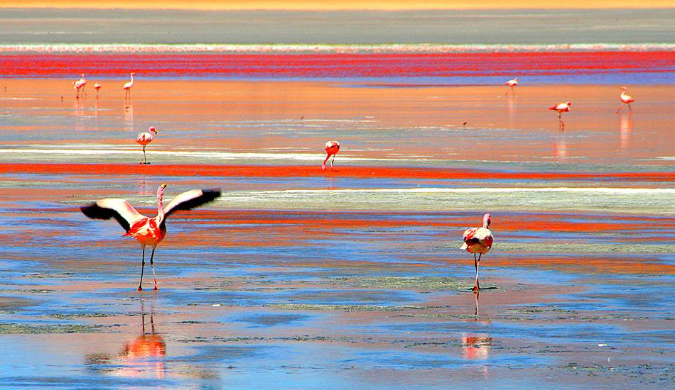 Лагуна-Колорадо, Боливия Пейзажи на этом озере настолько необычные, что сам Сальвадор Дали мог бы им позавидовать. Свой бордовый цвет вода в озере получает из-за планктона, красных водорослей и других обитающих в ней микроорганизмов, которые служат пищей для еще одной местной достопримечательности — фламинго Джемса, присутствие которого делает это место чем-то средним между Марсом и Карибскими островами.