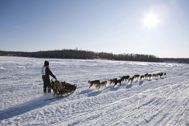 В первую субботу марта на Аляске проводятся ежегодные гонки на собачьих упряжках, получившие название Iditarod. К участию допускаются упряжки с 16 собаками. Вместе со своим каюром им необходимо преодолеть расстояние 1868 км, что обычно занимает от 8 до 15 дней. Маршруты гонки чередуются: по четным годам — «северный», по нечетным — «южный».