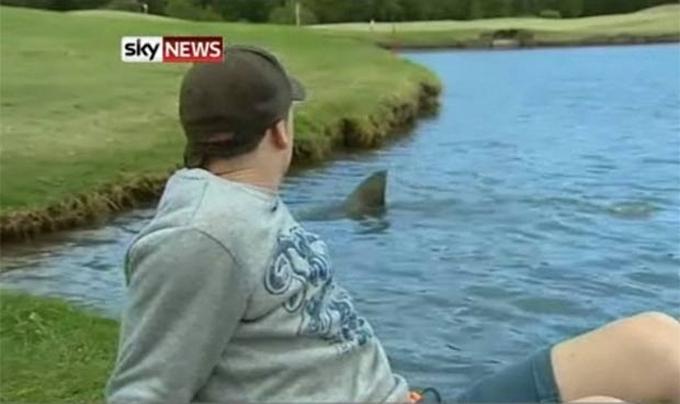 Реальный кадр местного телевидения, SkyNews. Акула заплыла в водоем, примыкающий к полю для игры в гольф. Съемочная группа оказалась там не случайно: днем ранее эта же акула прекрасно закусила игроком, случайно уронившим мяч в воду.