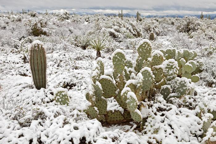 Атакама В самом засушливом месте на Земле — пустыне Атакама — в 2013 году выпал снег. За последние несколько лет это уже не первый случай, когда в пустыне можно наблюдать снегопад, но, как утверждают жители коммуны Сан-Педро-де-Атакама, этот снегопад был самым сильным за последние 30 лет.