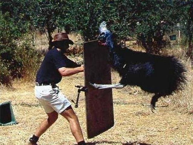 Привет, казуар. Для справки, казуары — мерзкие, злопамятные птицы, бегающие быстрее гепарда. Ударом лапы казуар способен распороть живот человеку. Теория, подтвержденная печальной практикой.