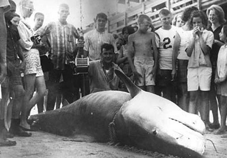 Вес акулы: 807 кг. Вальтер Максвелл вписал свое имя в историю как рыбак, которому посчастливилось поймать одну из самых больших тигровых акул. У Миртл-Бич, Южная Каролина, в 1964 году его добычей стала 807-килограммовая тигровая акула. Его рекорд никто не мог превзойти на протяжении 40 лет.