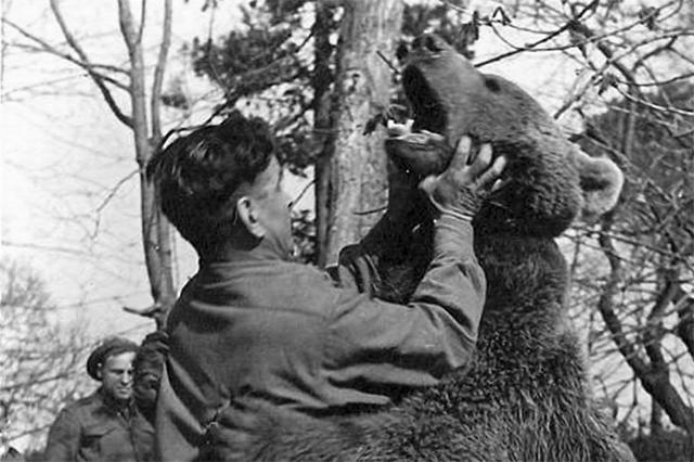 Первый раз Войтек показал себя в Палестине: на месте двух не замеченных караулом диверсантов дикий зверь оставил только кровавые лоскуты. Какое-то время Войтека боялись даже свои, однако, медведь к членам «своей» роты агрессии не проявлял никогда.