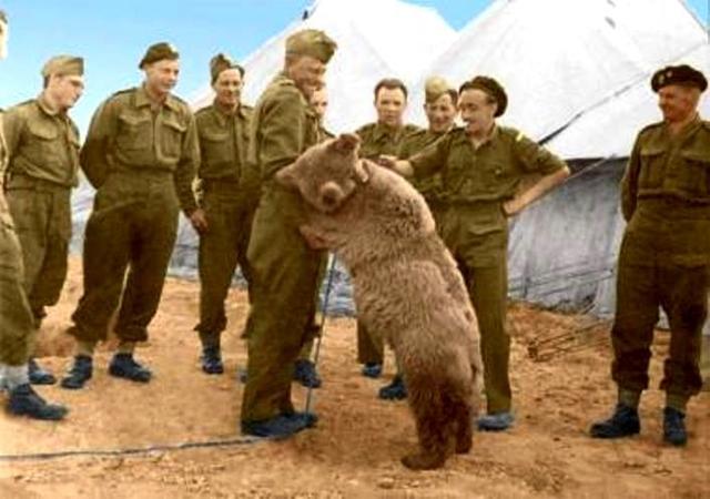 Польские солдаты нашли медвежонка в Иране. Банка консервов, карманный нож и пара шоколадок — вот точная стоимость, названная мальчишкой-хозяином тогда еще безымянного зверя. Медведь был так мал, что не мог пережевывать пищу сам и полякам приходилось кормить его из соски.