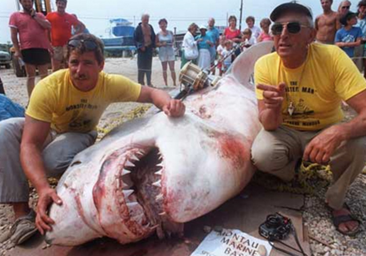 Вес акулы: 2041 кг. Чтобы поймать большую белую акулу в 1964 году, в числе прочего Фрэнку Мандусу потребовалось пять гарпунов. После 5 часов противостояния акула все же сдалась. Вес добычи составил 2041 кг.