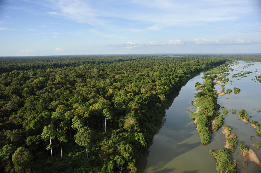 Лес Afromontane Африка Расположенный вдоль восточного края Африки лес Afromontane состоит из тропических и субтропических влажных широколиственных лесов. Он также таит в себе множество млекопитающих, птиц и земноводных. Расширение рядом расположенных поселений привели к сокращению территории леса до 11% от своего первоначального размера.