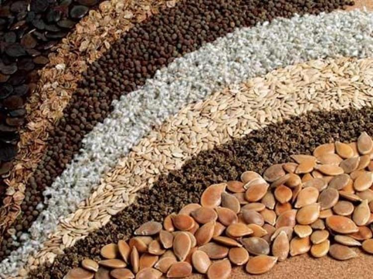 Семена Есть список семян, наиболее подходящих для посадки в конце зимы – начале весны. В этот список входят семена таких растений, как: салат-латтук, свекла, шпинат и руккола, скороспелый горох и горох стручковый; хорошо приживутся свекла, репа, редис и морковка. Капуста тоже придется весьма кстати.