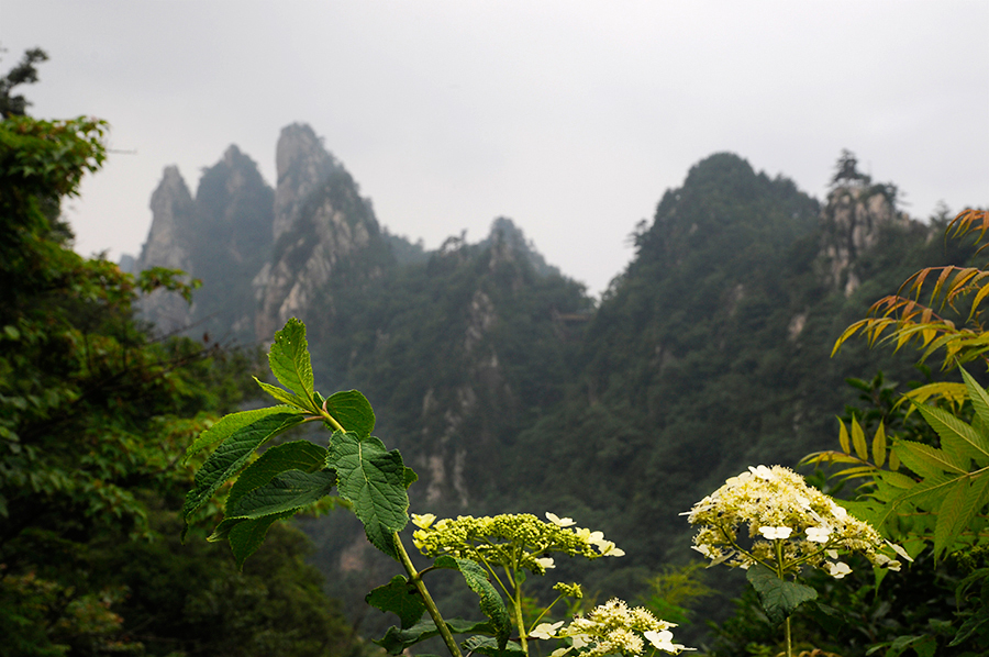 Горы Юго-Западного Китая Азиатско-Тихоокеанского регион Горы юго-западе Китая в Азиатско-Тихоокеанском регионе — дом для широкого спектра флоры и некоторых эндемичных видов, включая находящихся под угрозой исчезновения панд. Незаконная охота, чрезмерный выпас скота и сбор дров — вот только некоторые из основных угроз для существования этого леса. На данный момент сохранилось всего 8% от первоначального массива.