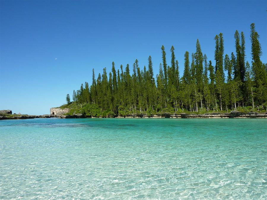 Новая Каледония Азиатско-Тихоокеанский регион Влажные тропические леса Новой Каледонии — дом по крайней мере для пяти эндемичных семейств растений. Добыча никеля, уничтожение лесов и инвазивных видов угрожают флоре и фауне, здесь осталось лишь 5% массива.