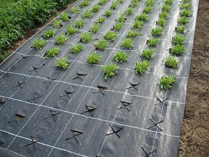 Дополнительная защита Для укрытия растений также можно использовать агротекстиль или агроволокно. Особенности агроволокна в том, что оно способствует циркуляции воздуха внутри и снаружи, отражает ультрафиолетовые лучи и пропускает внутрь тепло. Агроволокно с низкой плотностью может использоваться для защиты наших посадок от весенних заморозков.
