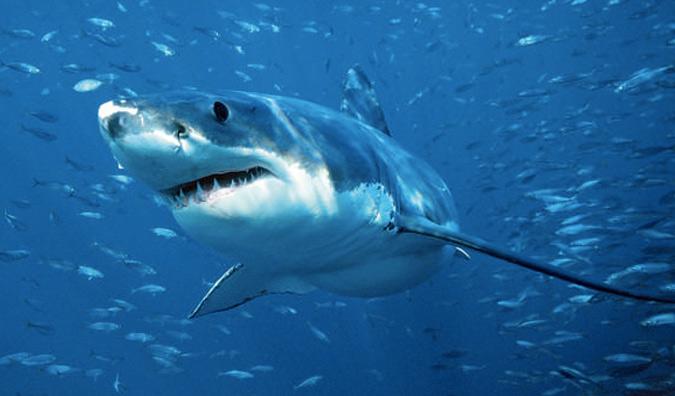 На пути Бена подстерегало множество опасностей. Главной из них были акулы. Для защиты от хищников пловец закрепил на своей лодке специальное устройство. В радиусе 6 метров прибор генерировал электромагнитное поле, которое отпугивало акул.
