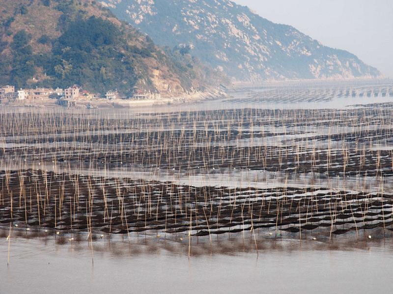 Отмель Сьяпу Прибрежная отмель, расположенная в провинции Фуцзянь, является популярным местом как для рыбалки, так и для фото. Буи, суда и бамбуковые столбы создают идеальные естественные декорации для съемки.