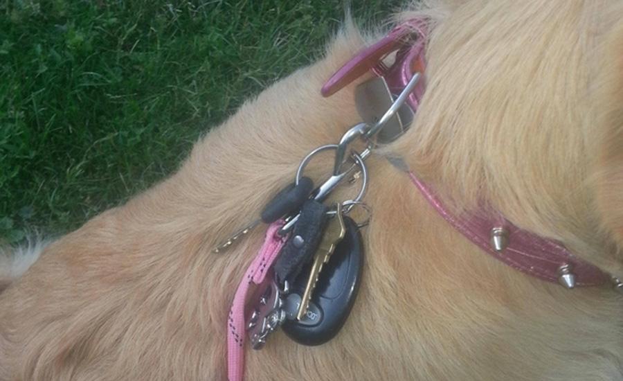 Пес и вещи Не хватает карманов для тяжелой связки ключей на прогулке? Прицепите их карабином к ошейнику пса. Главное теперь — не потерять пса.