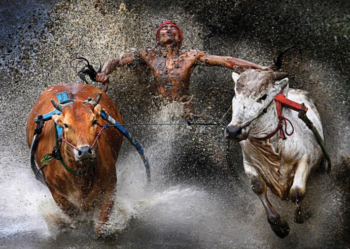 Потенциальные покупатели получают возможность посмотреть животных «в деле» и оценить их силу и выносливость.