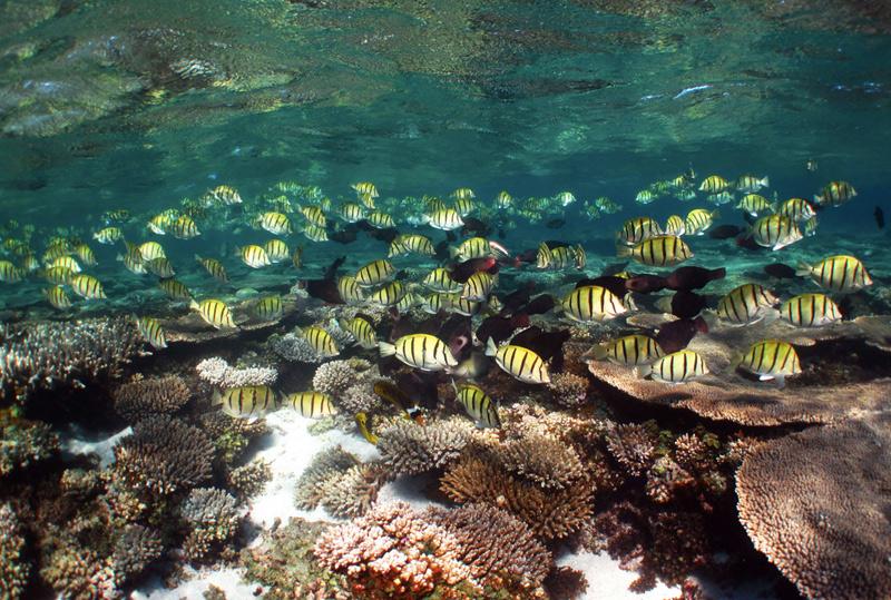 Нингалу, Австралия Коралловый риф в Индийском океане у северо-западного побережья Австралии простирается на 300 км. Он является единственным крупным рифом, расположенным столь близко от побережья, на отдалении всего от 100 метром до 7 км. Площадь природоохранной территории составляет 604500 га прибрежной зоны и акватории.