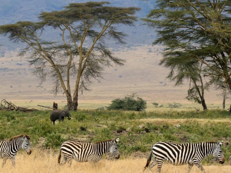 Серенгети, Танзания Площадь: 14 763 км² На равнинах парка обитают 500 видов птиц и 3 млн. особей крупных животных. В засушливый период и сезон дождей в парке можно наблюдать уникальное явление — миграцию животных, перемещающихся с октября по ноябрь с северных холмов на южные равнины, а затем на запад и север в апреле-июне. На севере парк граничит с кенийским заповедником Масаи-Мара, который является продолжением парка, а на юго-востоке от парка находится биосферный заповедник Нгоронгоро.