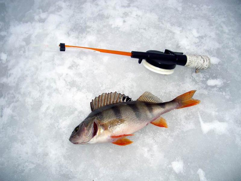 Алкоголь Ни в коем случае не берите с собой на рыбалку алкоголь. Он, конечно, хорошо согревает, но притупляет чувство опасности и нарушает координацию. Что случается с теми, кто ведет себя на льду неосторожно, смотри предыдущий пункт.