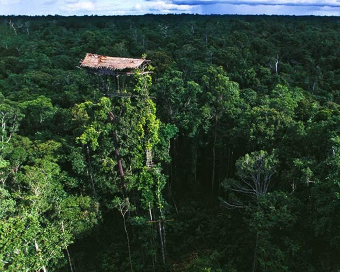 Экстремальный домик на дереве Ириан-Джая, Индонезия Индонезийские племена Коровай и Комбай расчищают просеки в лесах, специально чтобы освободить место для этих домов, расположенных на самых верхушках высоченных деревьев, открытых всем ветрам. Даже неизвестно, что хуже: все эти сумасшедшие порывы ветра или лестница, по которой в дом залезают хозяева.