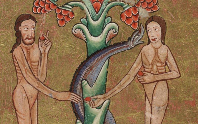 Змеи обвивают ветви и стволы деревьев Довольно часто можно увидеть изображение змея-искусителя, обвивающего ствол дерева познания. Однако это не имеет никакого отношения к их реальному поведению. Змеи забираются на ветки деревьев и лежат на них, обвивать же их своим телом им совершенно ни к чему.
