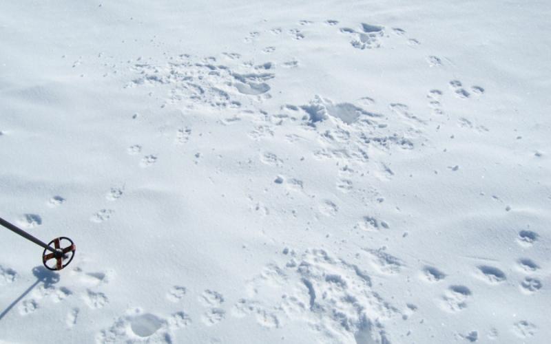 Выслеживание зверей Ранней весной легко можно наблюдать за зверями, ориентируясь по их следам на снегу или влажной грязи. Собрав все четкие следы, которые вы могли бы и не увидеть в другие времена года, можно с легкостью проследить за особенностями поведения диких животных. Наблюдайте и учитесь, это позволит вам со временем стать опытным следопытом.