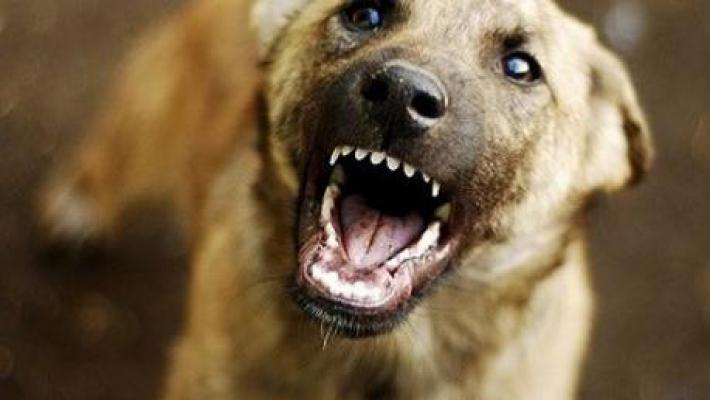 Команды Если собаки долго не решаются на атаку, стоит проверить их реакцию на команды. Тут главное, чтобы не дрогнул голос. Спокойная, но резкая команда типа «Фу!» и «Гуляй!» может охладить пыл псов, даже если они не приучены к этой команде. Эффективным может оказаться выкрик «Кошка!». Услышав его, стая может потерять к вам весь интерес и заняться поиском более интересного объекта.